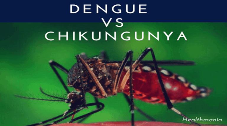 dengue vs chikungunya