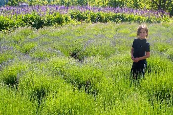 adaptogen herbs cure stress
