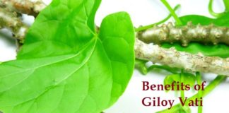 Benefits Of Giloy Vati